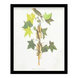 Custom Black Wood Frame of Authentic Vintage John James Audubon Alder Trail's Flycatcher Bird & Botanical Print For Sale