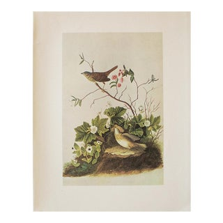 1966 Cottage Print of Lincoln's Sparrow and Lincoln's Finch by Audubon For Sale
