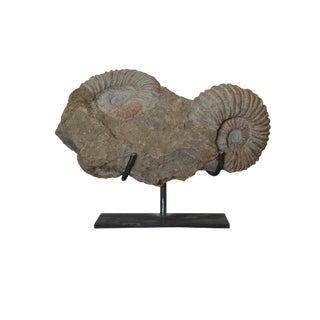 Fossilized Ammonite on Custom Iron Stand