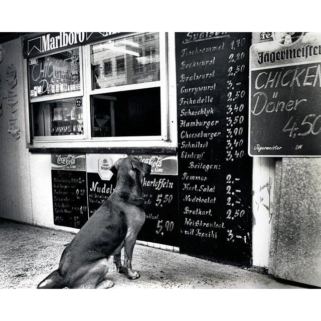"""The Dresden Dog"" Original Black & White Photograph - Image 2 of 3"