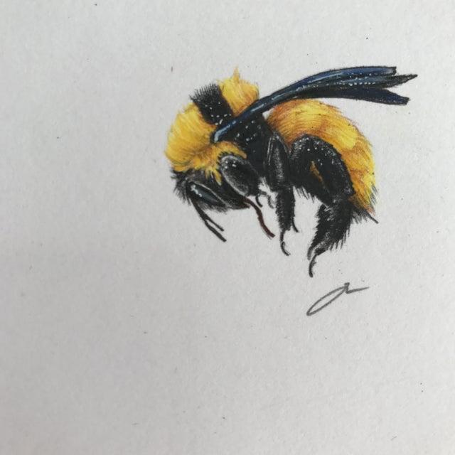 Original Queen Bee Drawing For Sale - Image 4 of 8