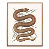 Image of Vintage Woodland Snake Print - 16 X 20 For Sale