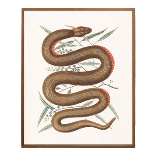 Vintage Woodland Snake Print - 16 X 20 For Sale