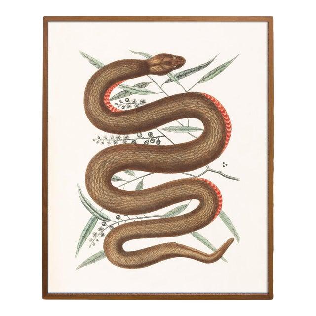 Vintage Woodland Snake Print - 16 X 20 For Sale