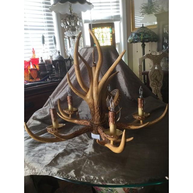 Deer Antler Chandelier For Sale - Image 4 of 10