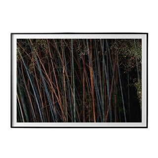"""Bamboo (Horizontal)"" Unframed Photographic Print For Sale"