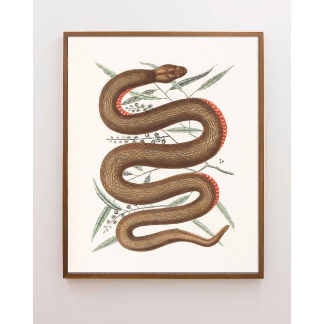 Not Yet Made - Made To Order Vintage Woodland Snake Print - 16 X 20 For Sale - Image 5 of 5