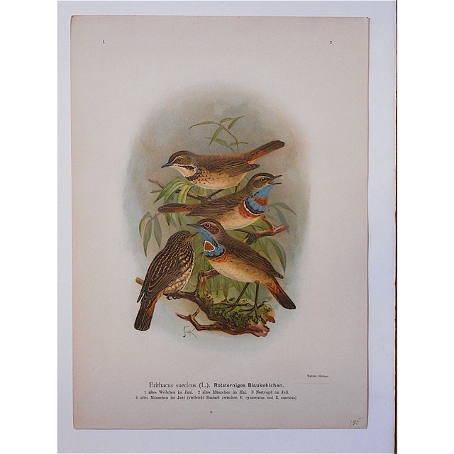 This antique 19th-century chromolithograph series (stone lithograph where each color is laid in with a separate...