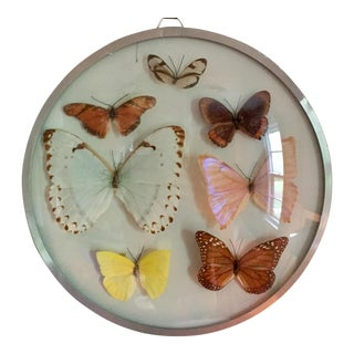 Vintage Butterfly Specimens For Sale