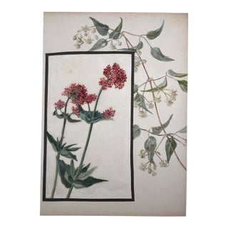 Antique British Botanical Watercolor on Linen and Board: Red Valerian and Honeysuckle For Sale