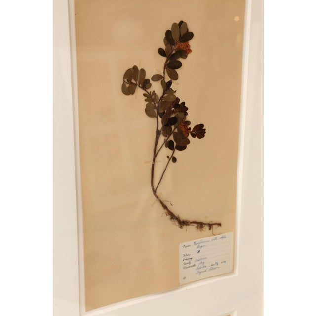 1930s Framed Set of Four Herbaria For Sale - Image 5 of 12