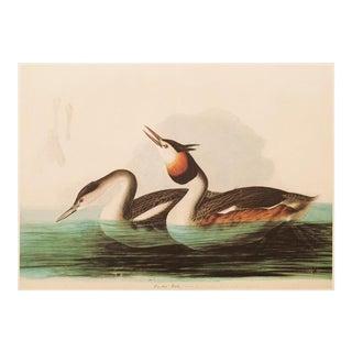 "1960s Audubon ""Crested Grebe"", Vintage Cottage Style Print For Sale"