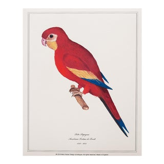 1590s Anselmus De Boodt Red Parrot Print For Sale