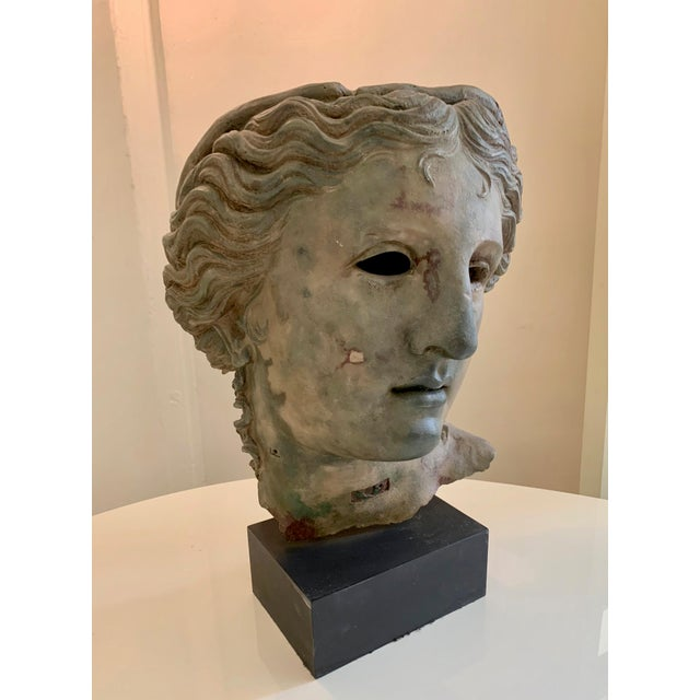Bust of Adonis, From the British Museum Gift Shop For Sale - Image 4 of 13