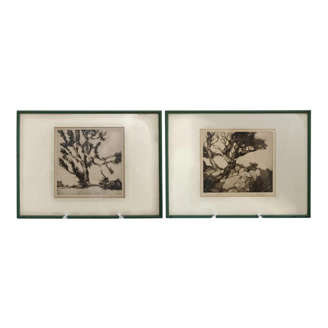 Monterey Cypress and Joshua Tree of Drypoint Etchings by Stephen ...