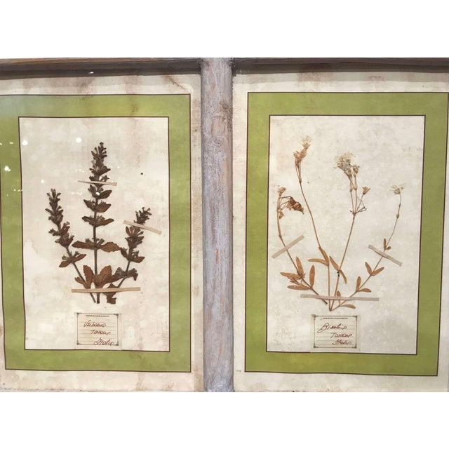 Pair of 21st Century Italian Dried Botanical Flowers in Painted Frames For Sale - Image 9 of 11