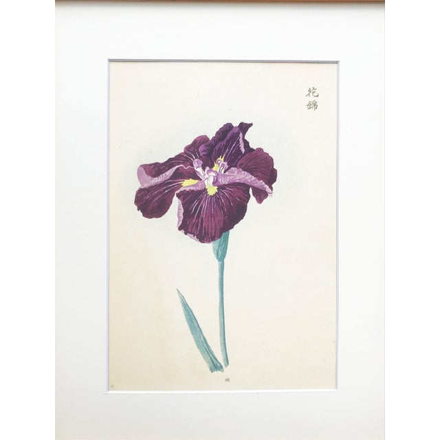 Japanese Iris Woodblock Botanical Print C.1900 For Sale - Image 4 of 9