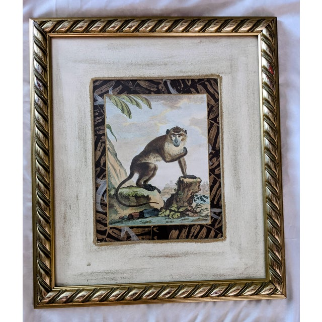 Late 20th Century Hand-Colored Engravings of Monkeys After G. Buffon, Framed - Set of 4 For Sale - Image 4 of 13