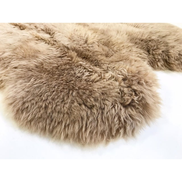 The naturalness and softness of a sheepskin rug can quickly elevate a room's beauty. On the floor, tossed over chairs and...