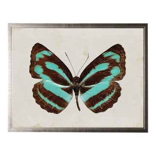 Dark Brown and Turquoise Striped Butterfly For Sale