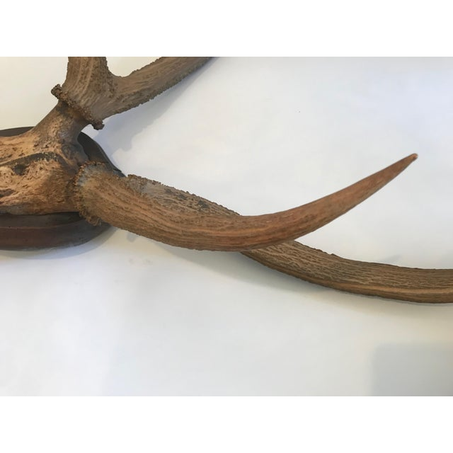 Brown Late 20th Century Mounted Horn Plaque For Sale - Image 8 of 13