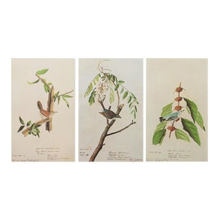 1966 Cottage Style Lithographs by John James Audubon - Set of 3