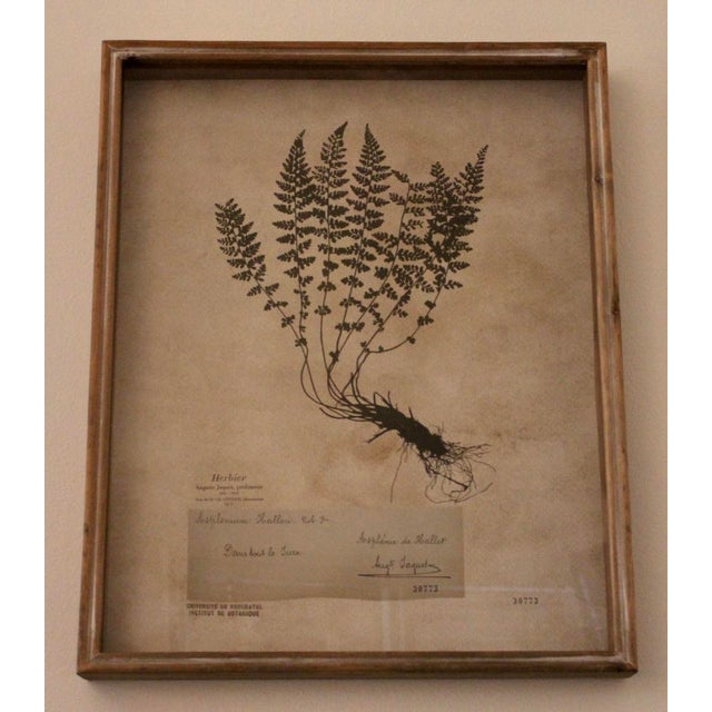Mid 20th Century Botanical Prints in Reclaimed Wood Frames - a Pair For Sale - Image 5 of 7