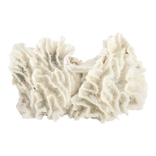 Natural White Lettuce Coral Specimen For Sale