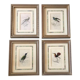 Gallery Wall Collection 4 Vintage Hummingbird Prints Original Frames Mid Century For Sale