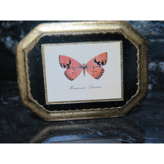 Transitional Butterfly Plaque Hanging Decopage Style For Sale - Image 3 of 12