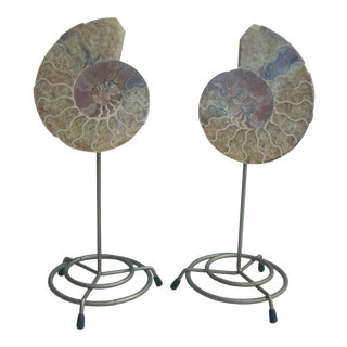 Mounted Split Ammonite Fossil - A Pair For Sale