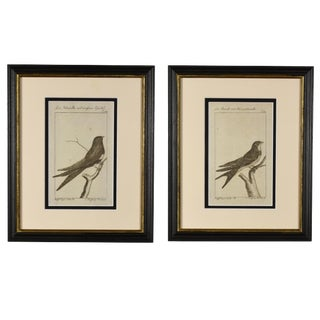 Late 18th Century Antique German Bird Prints - A Pair For Sale