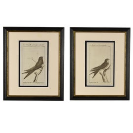 Image of Bird Prints