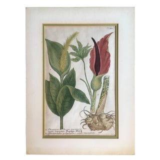 Hand Colored Botanical Print For Sale