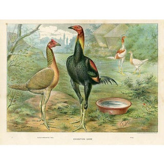 Victorian Poultry Print - Game Bantams For Sale