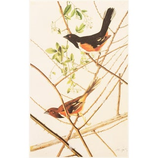 1960s Cottage Lithograph of Rufuous-Sided Towhee by Audubon For Sale
