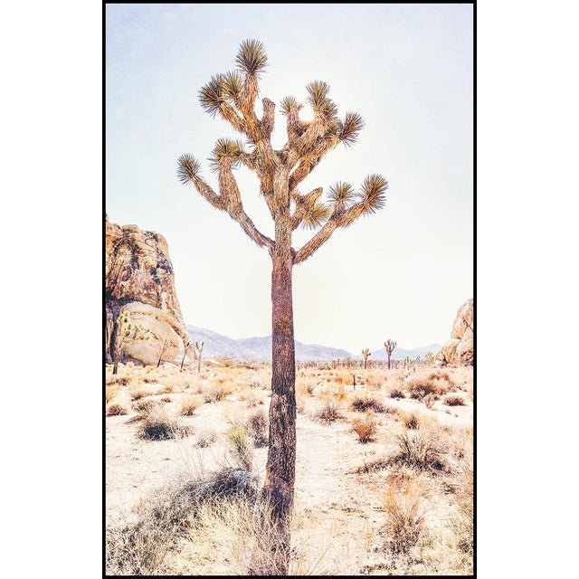 Original photograph taken in Joshua Tree National Park. Lightjet Type C Print 16x20 in Other Sizes available: Please...