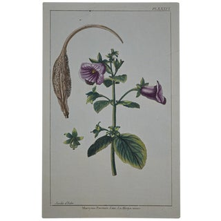 "Rare 18th Century Hand Colored Botanical Engraving Plate XXXVI From ""Jardin D'Eden"" by Pierre Joseph Buchoz For Sale"