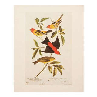 1960s Cottage Style Lithograph of a Louisiana Tanager and Scarlet Tanager by Audubon For Sale