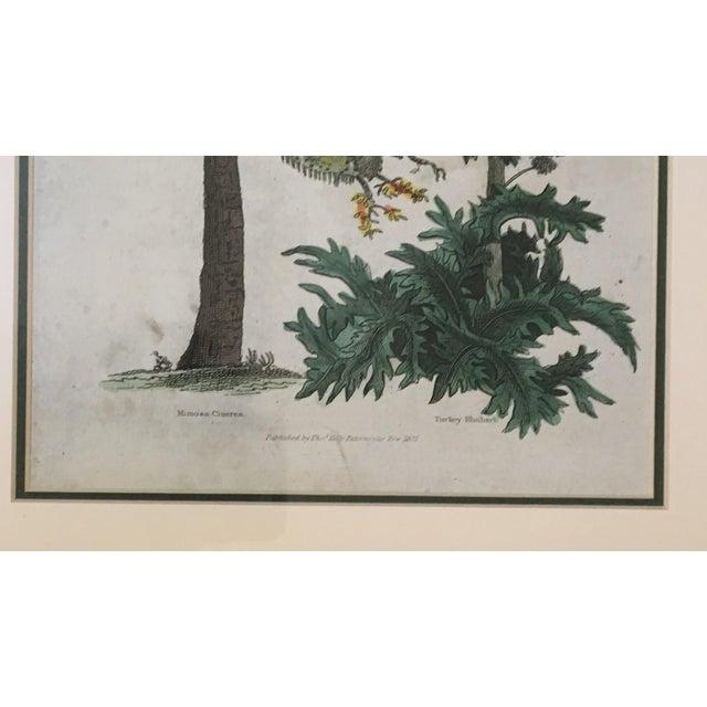 English Botanical Lithograph - Image 3 of 5