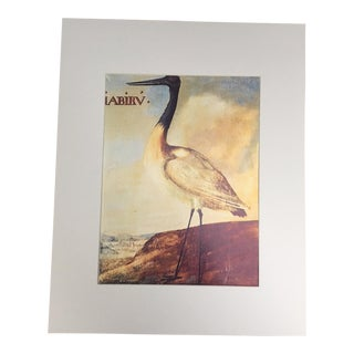 "Albert Eckhout's Jabiru - 1970s Print of 1644 Painting From ""Birds of Brazil"""