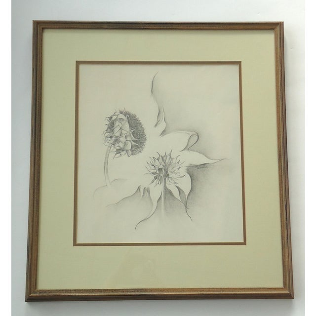 "A study of sunflowers without petals, drawing on paper by Julie Schaefer. Sight size 13.5"" x 15"", framed size 21.6"" x..."