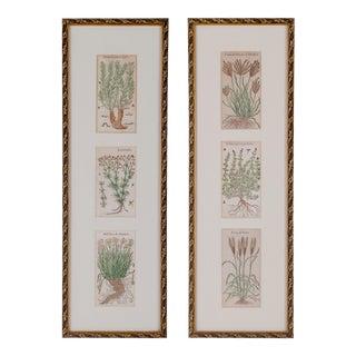 Botanicals from Daléchamps' Histoire General des Plants c.1653 For Sale