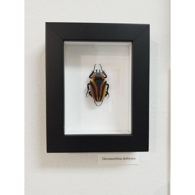 Contemporary Beetle in Murano Glass by Toffolo For Sale - Image 3 of 7