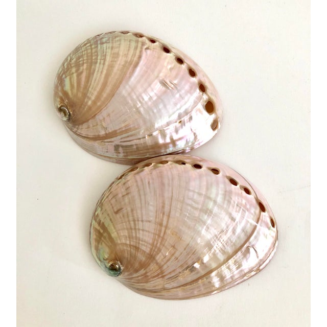 1960s Australian Abalone Shells - a Pair For Sale - Image 5 of 5