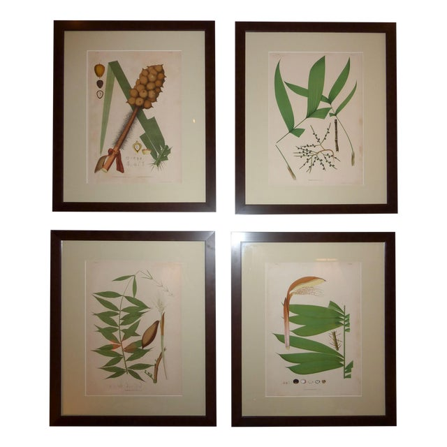1903 Palm Engravings by Joao Barbosa Rodrigues - Image 1 of 8