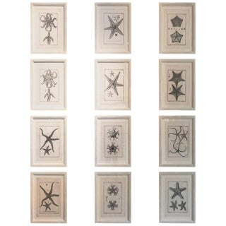 18th Century Rare French Engravings of Sea Stars
