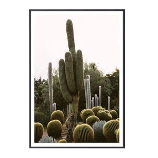 """California Cactus Garden #2"" Unframed Photographic Print For Sale"
