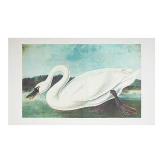 "1966 ""Whistlin Swan"" Lithograph by Audubon For Sale"