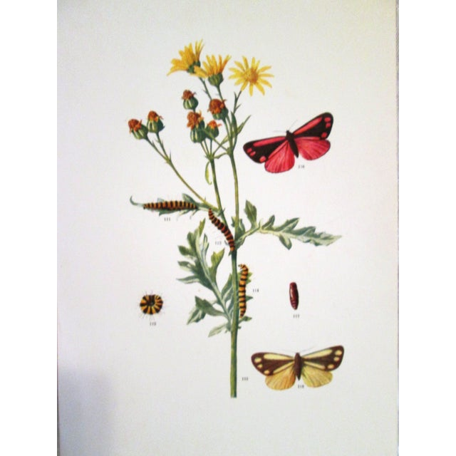 1903 Butterfly & Botanical Prints - Pair - Image 3 of 8